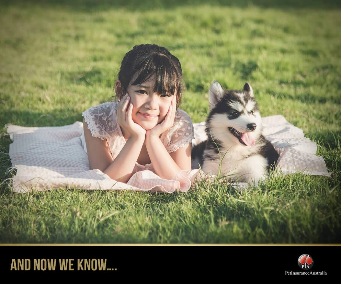 Did you know? - Interesting Husky Fact - Pet Insurance ...