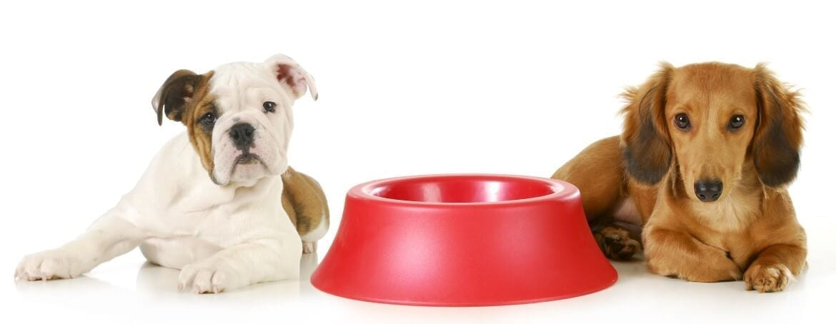 unusual claims made for pet insurance