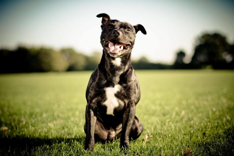 well-mannered dog