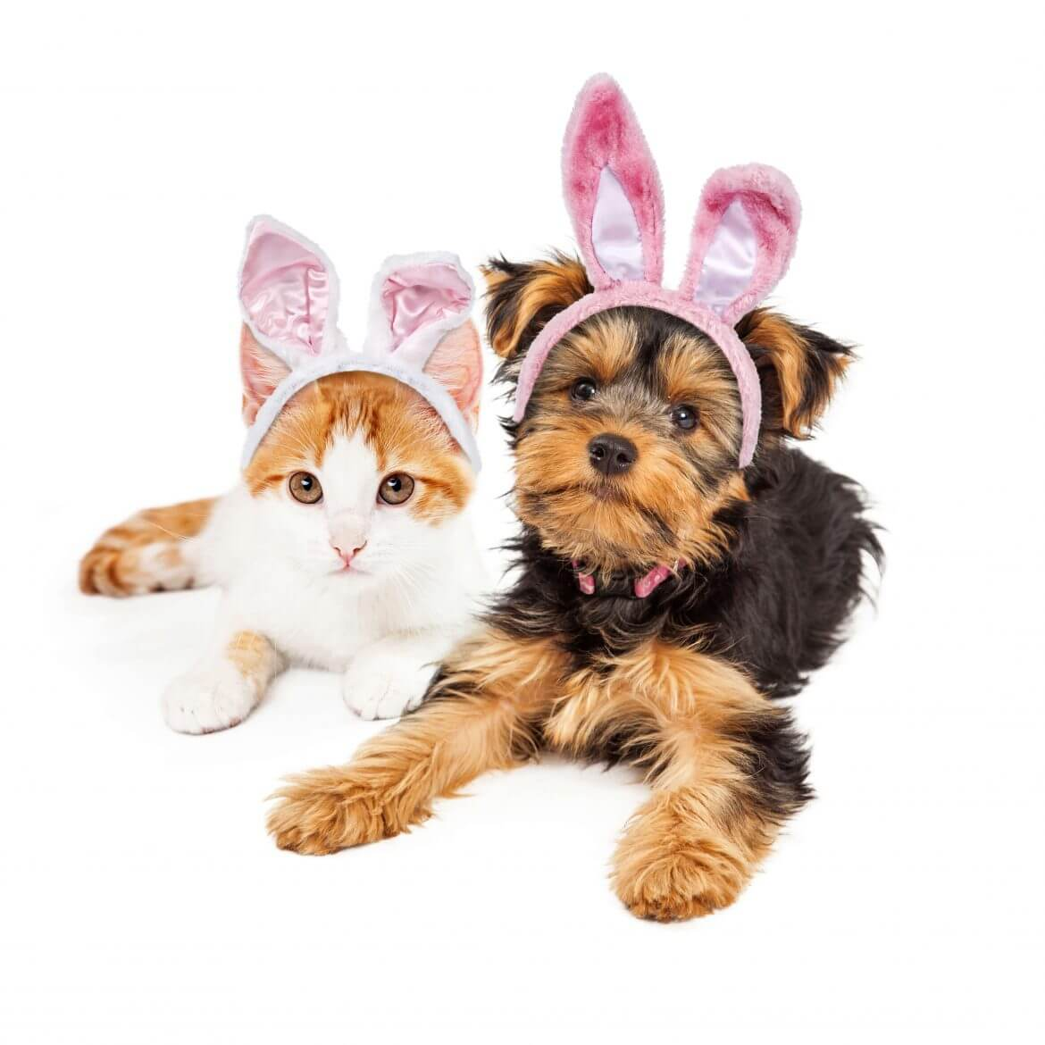 Keep your Pet Safe this Easter - PIA