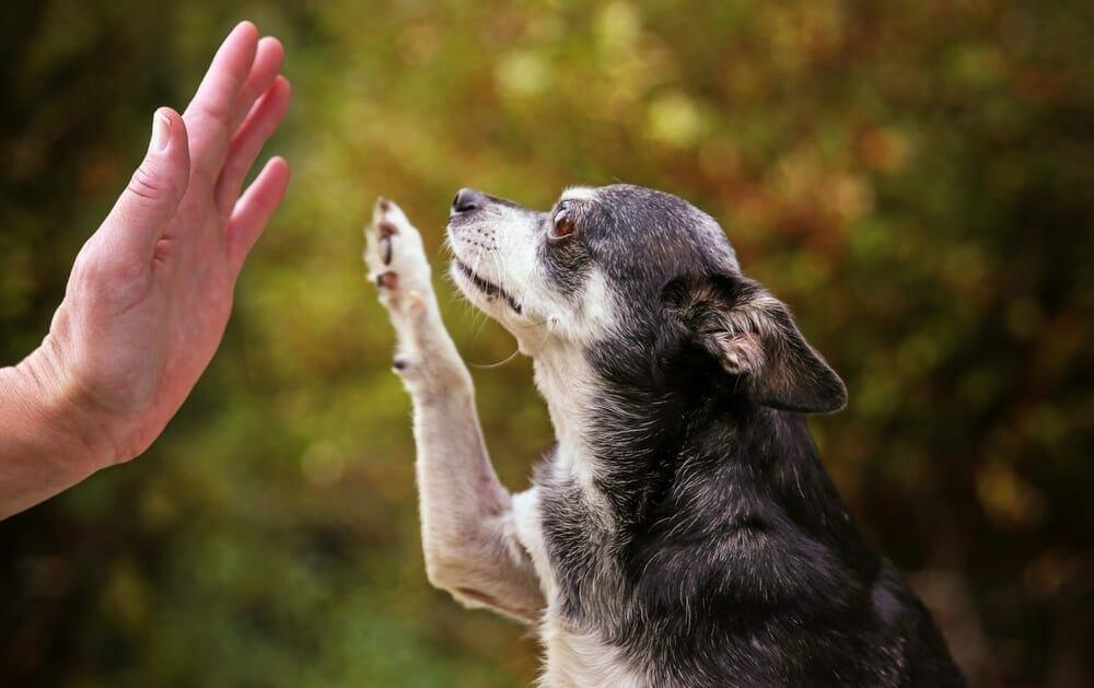 Exercising Your Older Dog