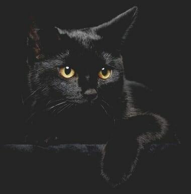 Cats insurance Australia
