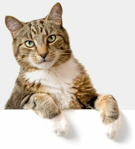 Cat Insurance Australia