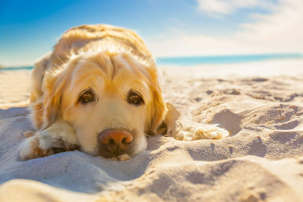 SKIN CANCER AND PETS