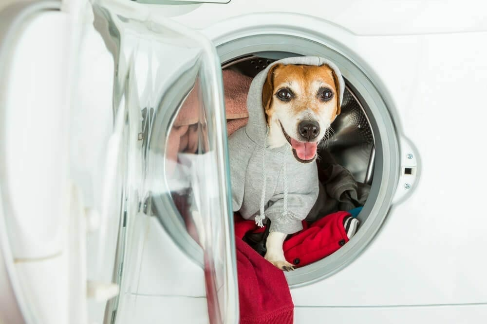 Household Chemicals & Pets