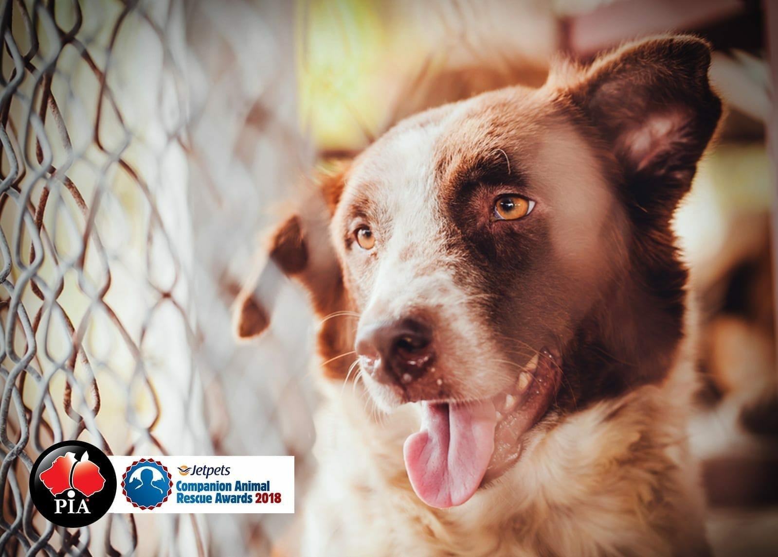 Jetpets Companion Animal Rescue Awards 2018