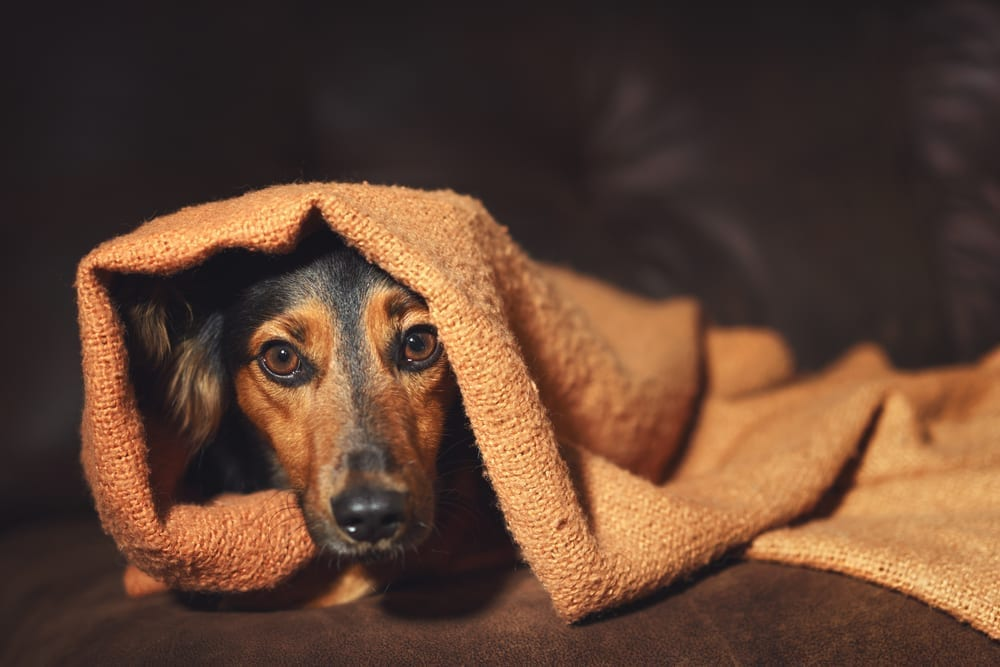 anxiety disorder in pets