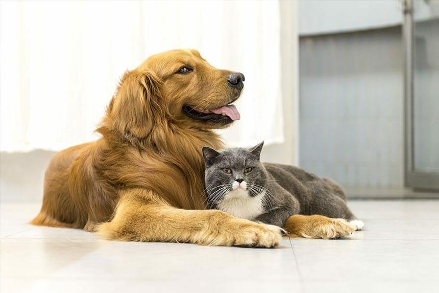Is Pet Insurance Worth It? - Pet Insurance Australia