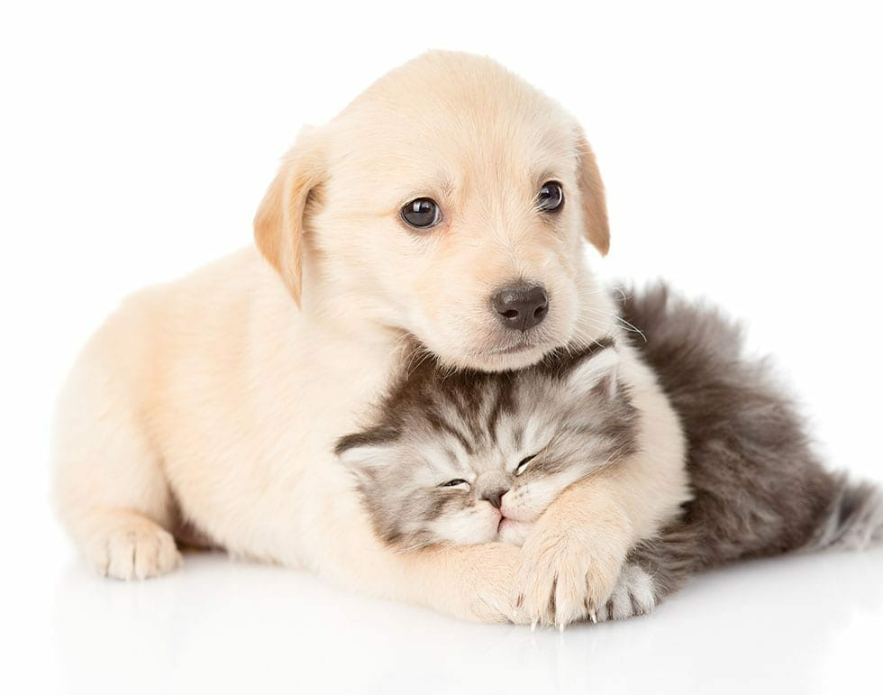 Is Pet Insurance Worth It for a Puppy or Kitten