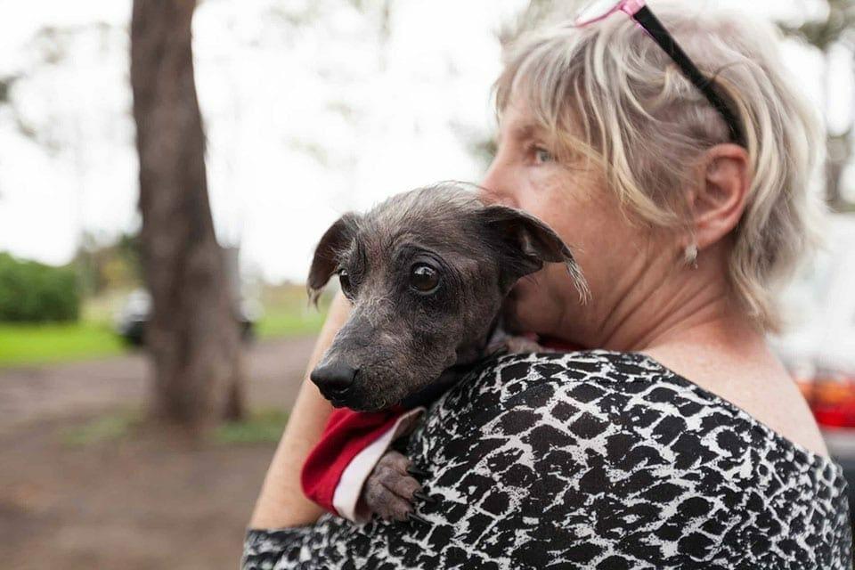 JetPets Companion Animal Rescue Awards 2019 - Pet Insurance