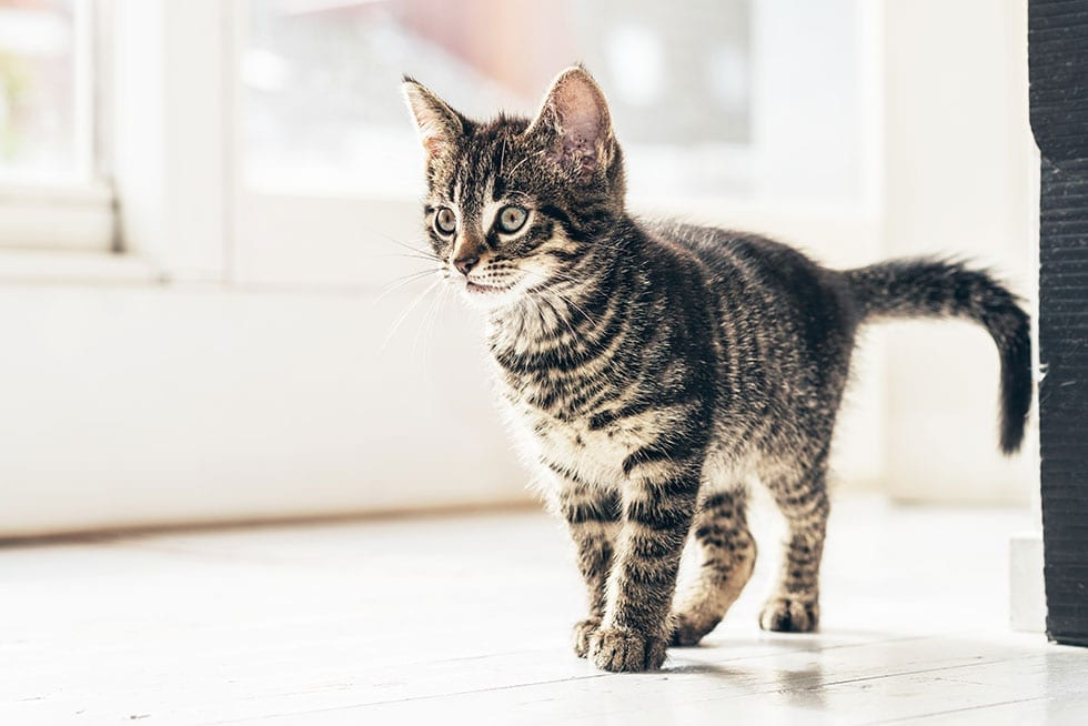 Top Tips for Moving with Pets