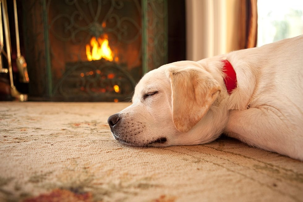 300 Increase in Pet Burns Over Winter