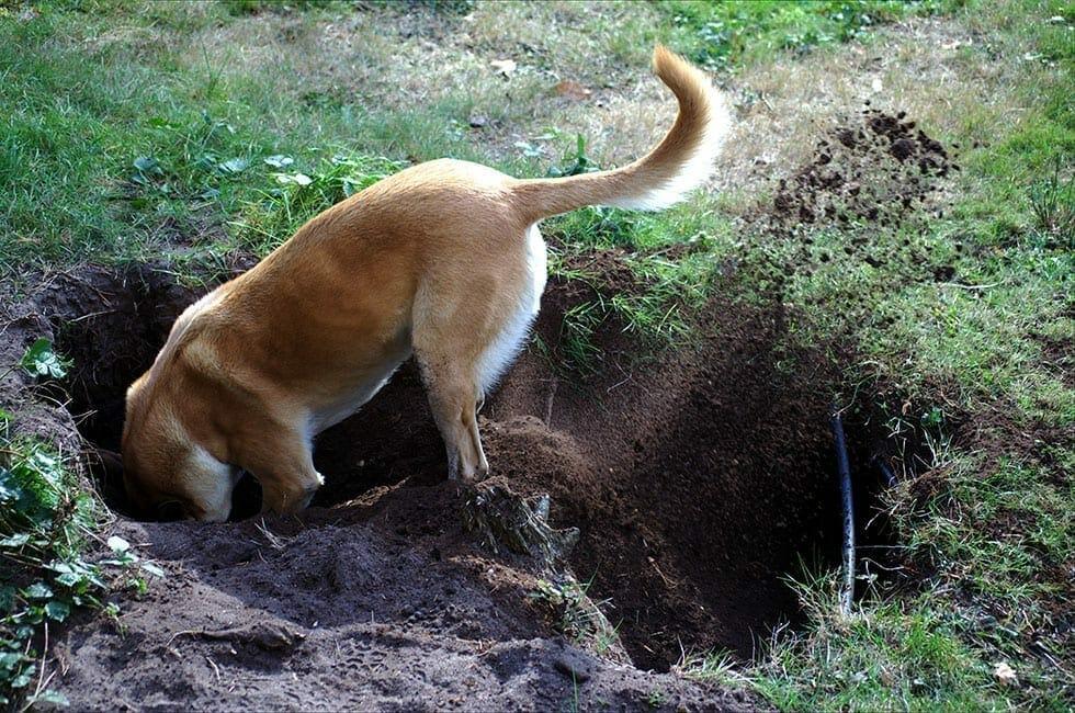 Dog Behaviour Problems
