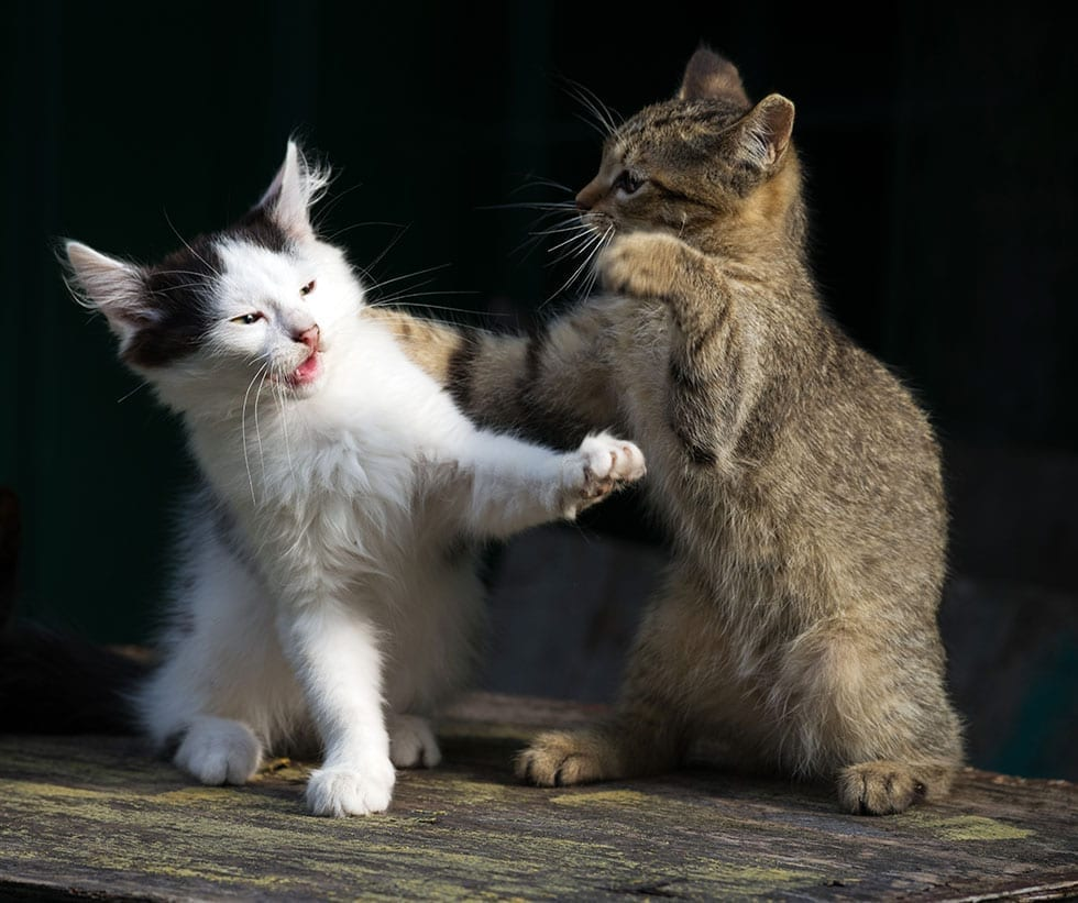 How do you get your cats to stop fighting
