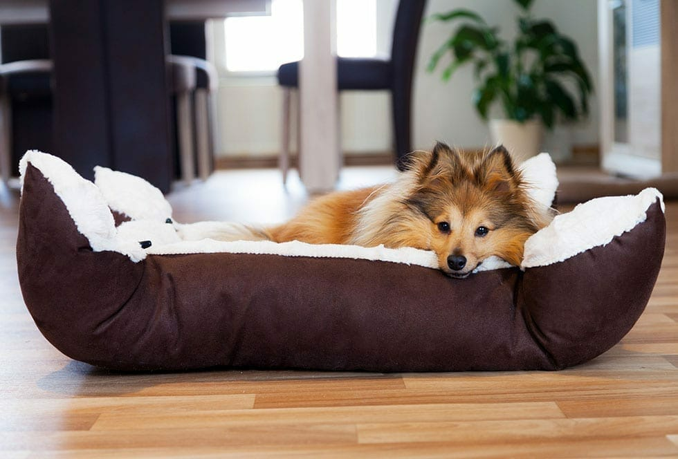 A Guide to Dog Beds