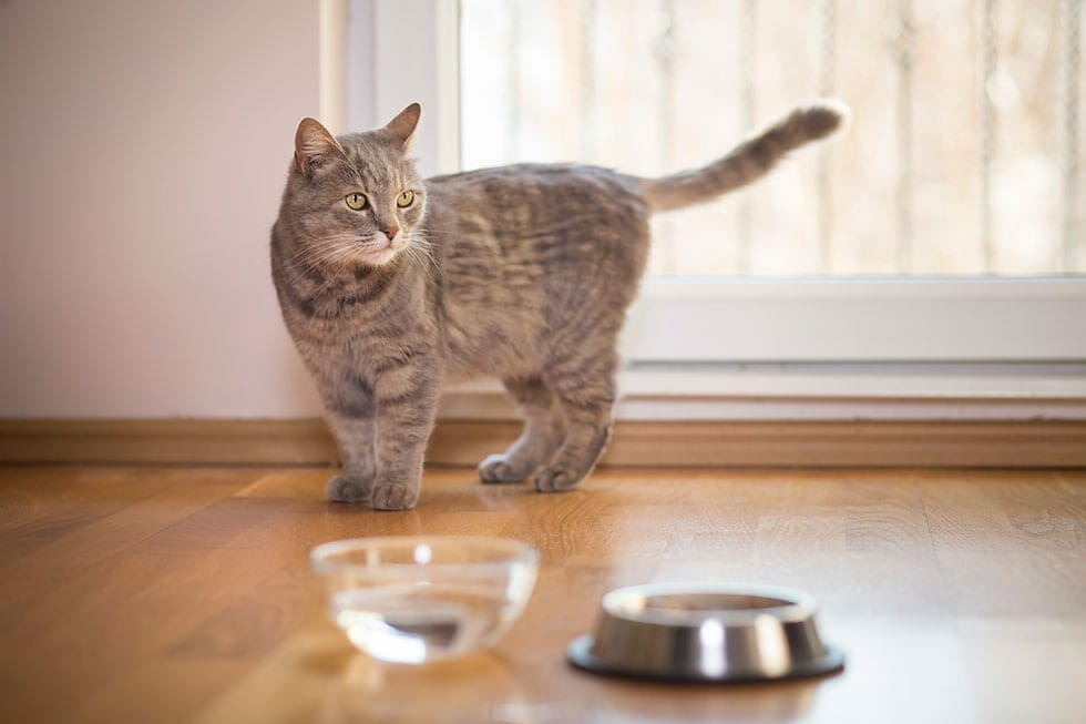 How Long to Keep a Cat Indoors 1