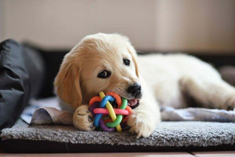 Top Puppy Pet Supplies