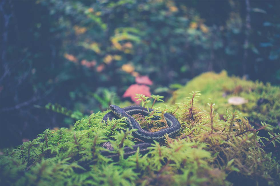 What do I need to know about Snake Season