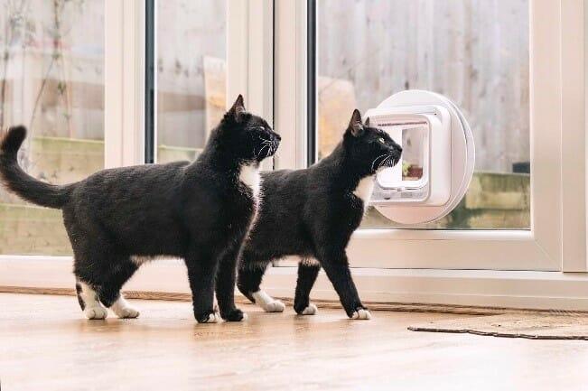SureFlap Microchip Cat Door Connect