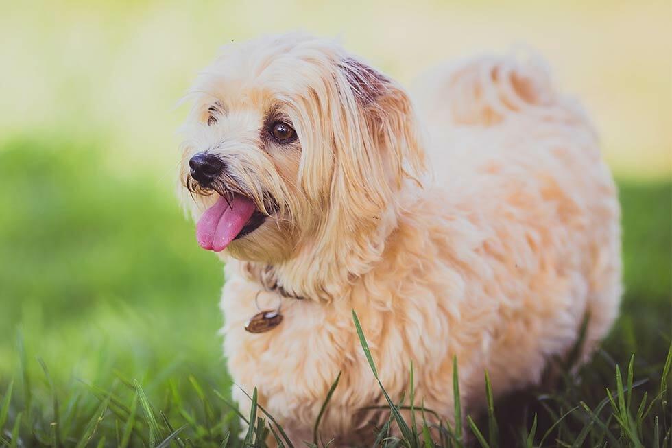 Most Popular Cat Dog Breeds 2019