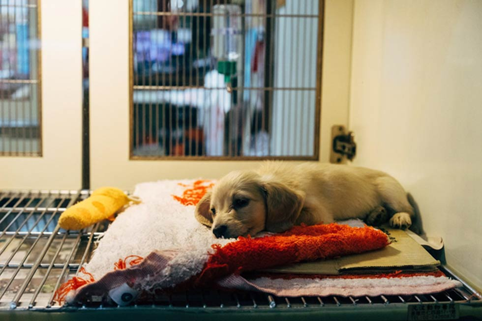 Why Fostering Shelter Pets Is More Important Than Ever