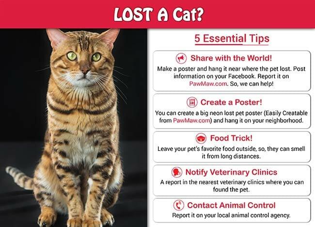 lot pet tips
