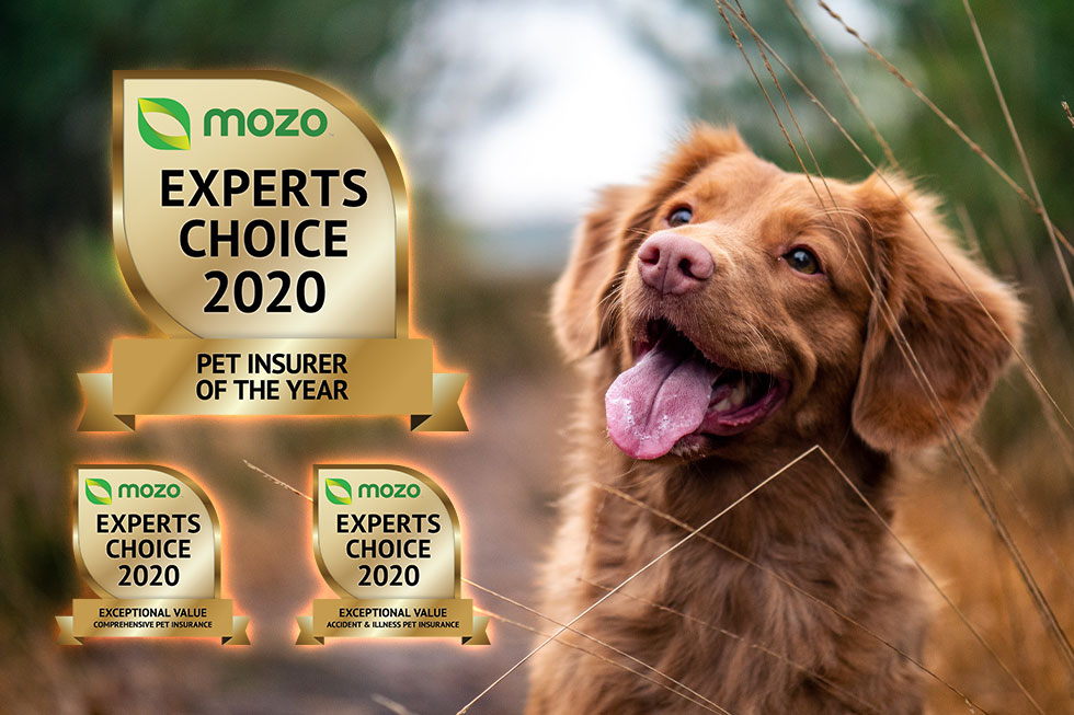 2020 pet insurer of the year