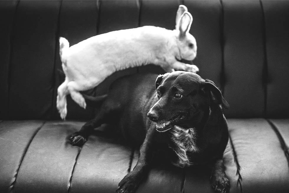 Dogs and rabbits