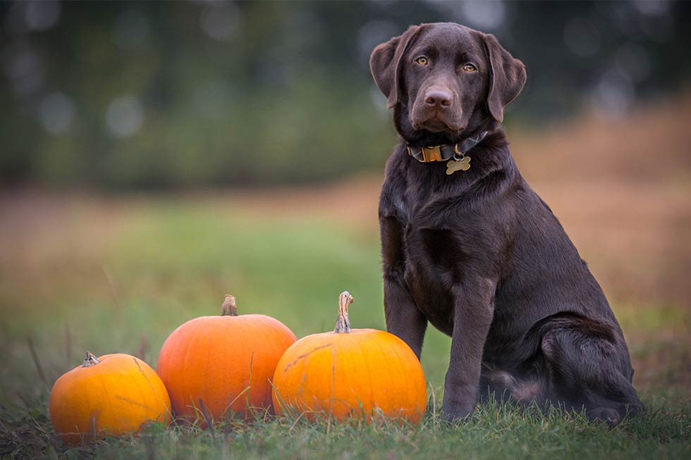 Horror hound halloween