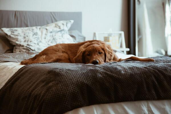 dog bedroom2