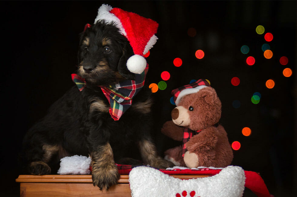 pet gifts christmas