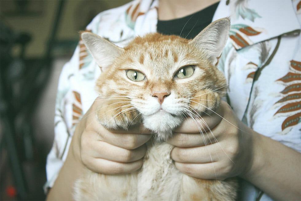 cats dislike being held