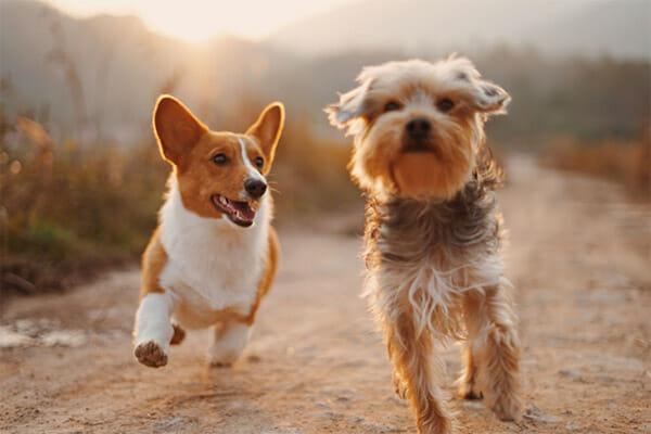 arthritis cars dogs2