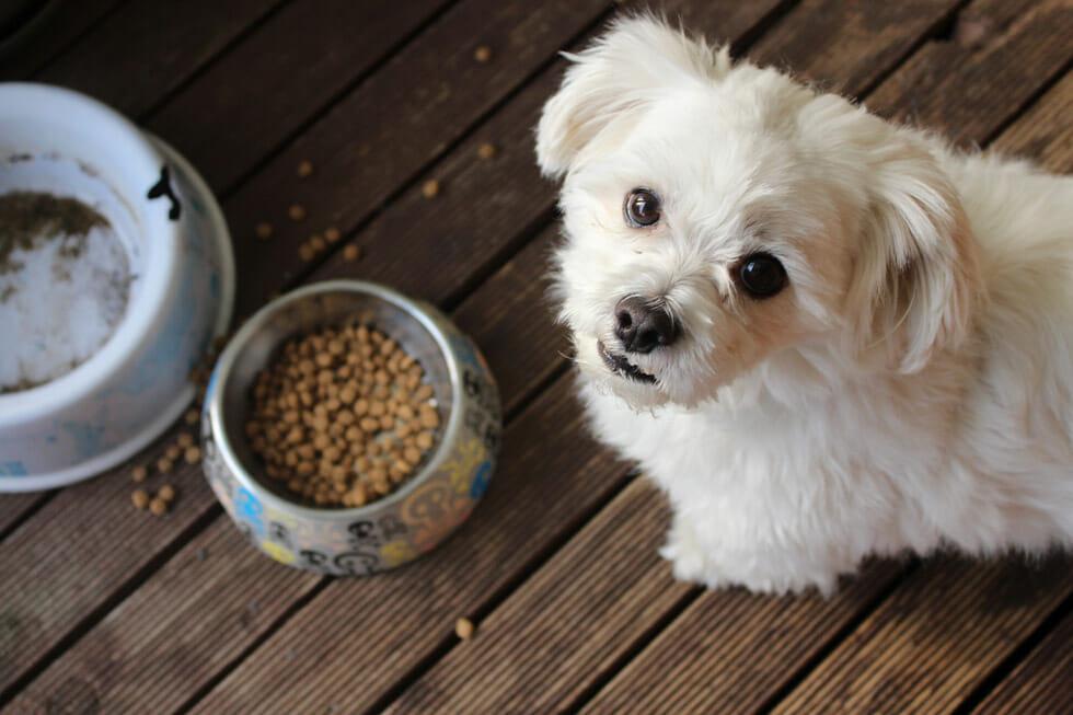 Choose right dog food