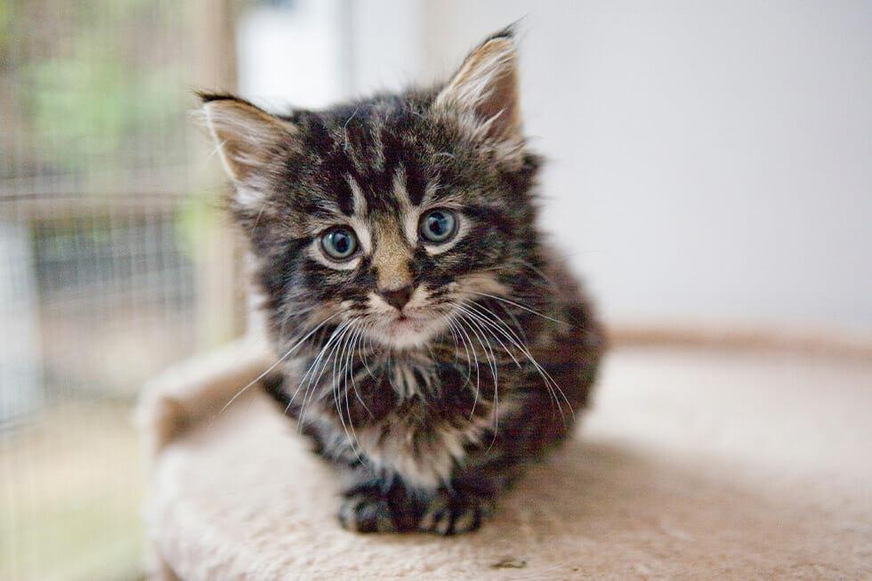 pet adoption tips
