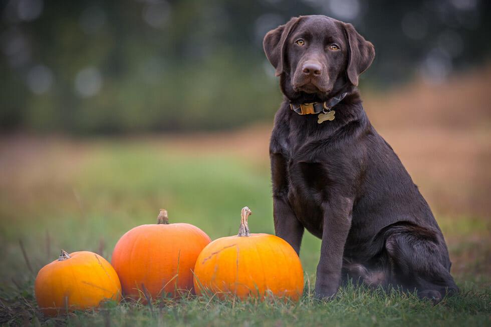Halloween spook pets
